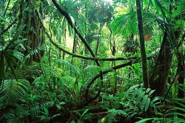 Hvordan finder man vej i forbrugslåns-junglen?